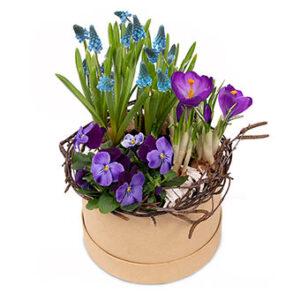 Fin vårgrupp med vårblommor i blått och lila, planterade i en söt hattask. Blommorna hittar du hos Euroflorist.