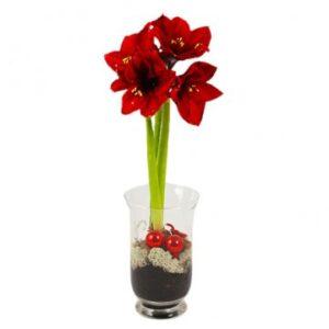 Glasvas med röd amaryllis och röda julkulor. Ur Florister i Sveriges sortiment.