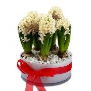 Vit rund glasskål med vita hyacinter. En julgrupp från Florister i Sverige.