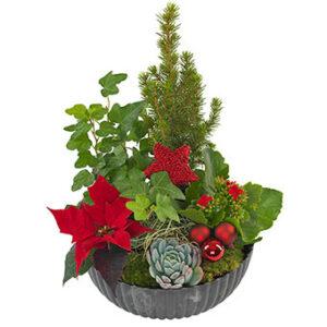 Klassisk julgrupp i rund skål. Skicka julgruppen med ett blombud från Euroflorist - beställ enkelt online.