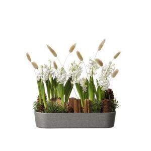 Hyacinter, kanel, kottar, grönt och hartassar i en härlig kombination. Allt arrangerat i en avlång skål. Blomstergruppen hittar du hos Interflora - skicka den med ett blomsterbud!