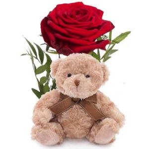 Röd ros och nalle. Skicka gåvan med ett bud från Euroflorist och gör någon glad!
