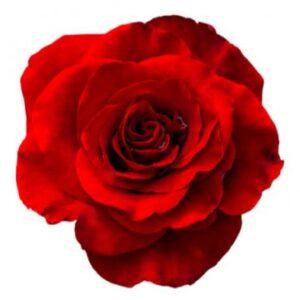 Röd ros - välj antal till din bukett själv. Ett alternativ hos Florister i Sverige.